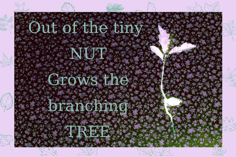 From the nut the tree 5